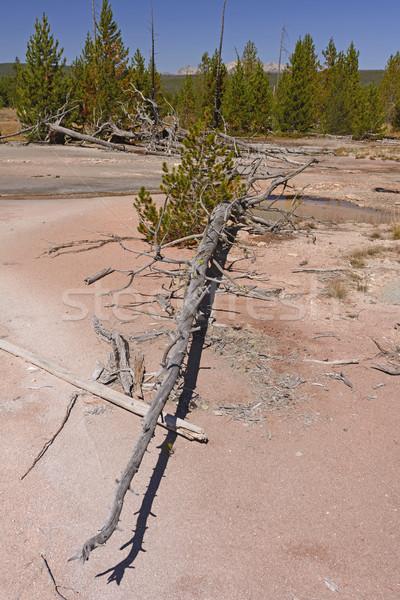 Toter Baum malen Natur Bäume Kiefer Remote Stock foto © wildnerdpix
