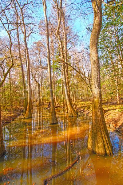 Kleurrijk bos park South Carolina water afstandsbediening Stockfoto © wildnerdpix
