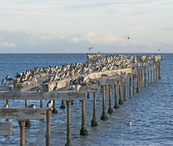 Móló elhagyatott madarak part part csinos Stock fotó © wildnerdpix