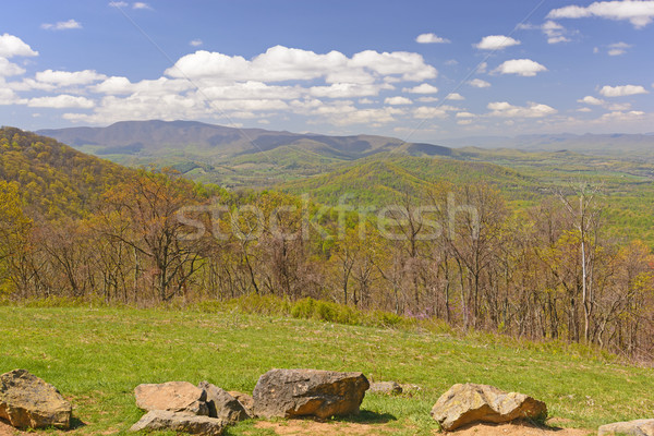 Spring Starting to Move up the Mountains Stock photo © wildnerdpix