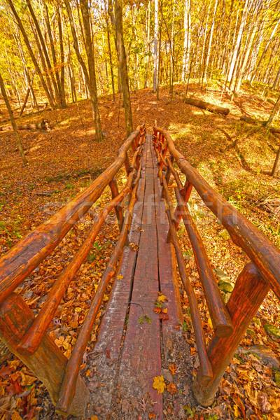 Main pied pont automne forêt parc Photo stock © wildnerdpix