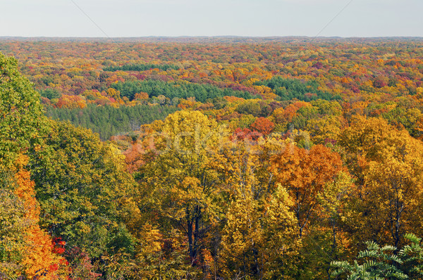 Fall Panorama in a Midwest Forest Stock photo © wildnerdpix