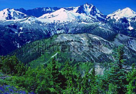Mt Rainier and the White River Stock photo © wildnerdpix