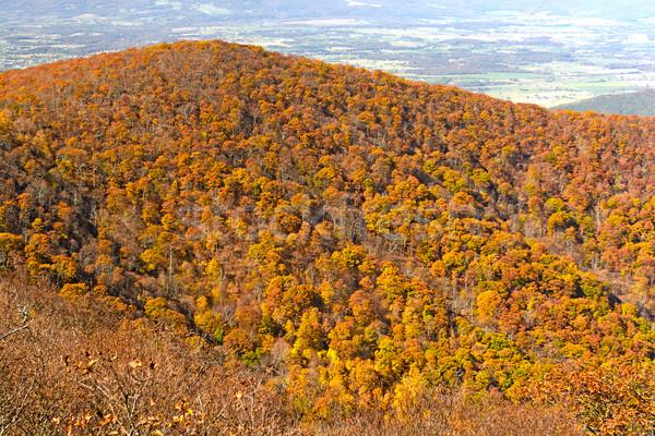 őszi színek park Virginia természet ősz távoli Stock fotó © wildnerdpix
