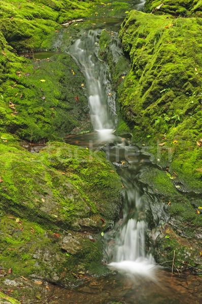 Cichy kaskada zielone lasu obniżyć wody Zdjęcia stock © wildnerdpix