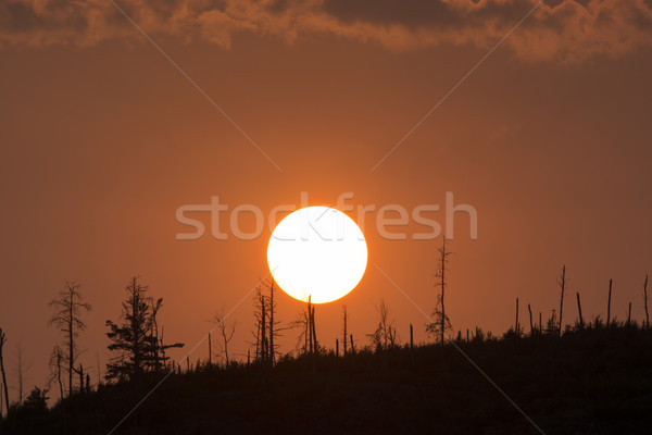Sunset over a North Woods Ridge Stock photo © wildnerdpix