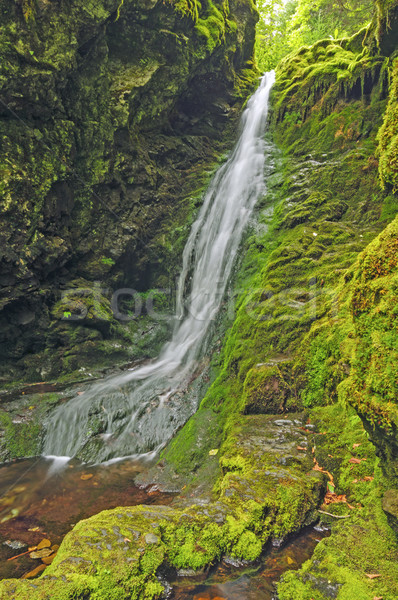 Falls in a Mossy Canyon Stock photo © wildnerdpix