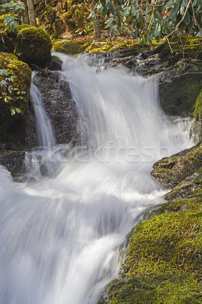 Rushing Cascade in the Mountains Stock photo © wildnerdpix