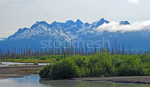 Wetlands and mountains Stock photo © wildnerdpix