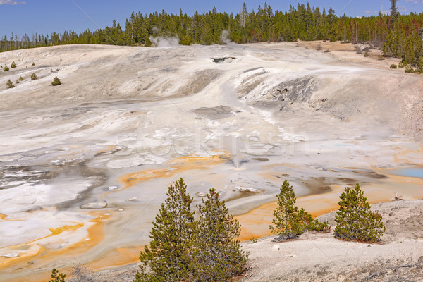 Panorama of a Thermal Area Stock photo © wildnerdpix
