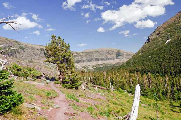 Alpine trail in the wilderness Stock photo © wildnerdpix