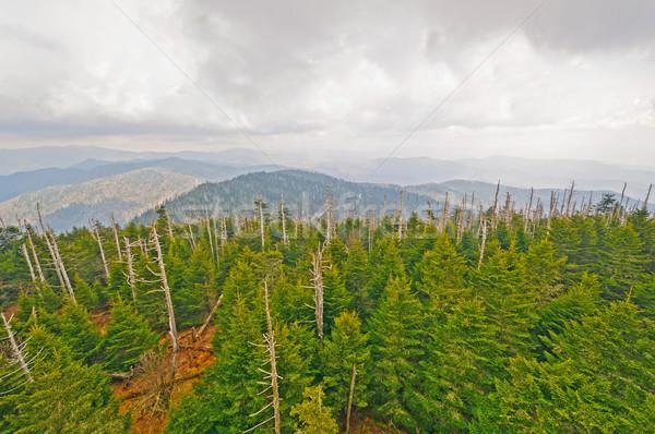 Clouds and Pines on a Mountain Ridge Stock photo © wildnerdpix