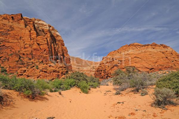 Sandy Trail into a Desert Canyon Stock photo © wildnerdpix