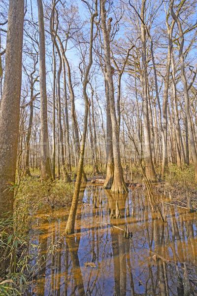 Liściastego lasu słońce parku South Carolina drzewo Zdjęcia stock © wildnerdpix