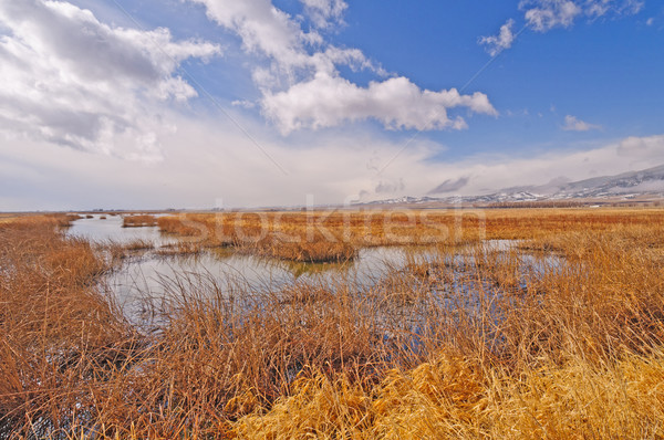 Early Morning in the Mountain Wetlands Stock photo © wildnerdpix