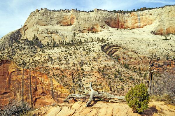 Kumtaşı çöl güneybatı duvar muhteşem Stok fotoğraf © wildnerdpix