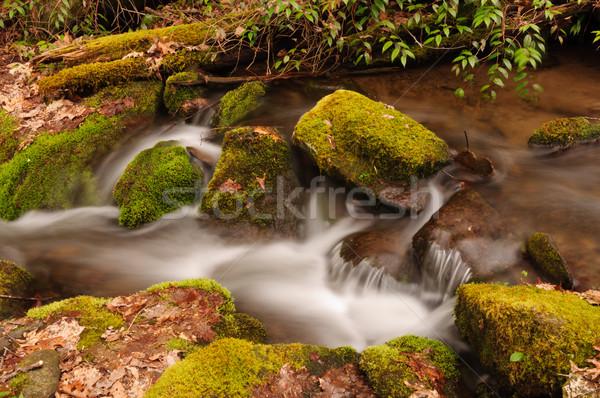 Moss and rocks in Mountain Stream Stock photo © wildnerdpix