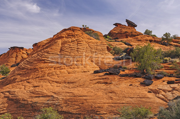 Frozen Sand Dunes in the west Stock photo © wildnerdpix