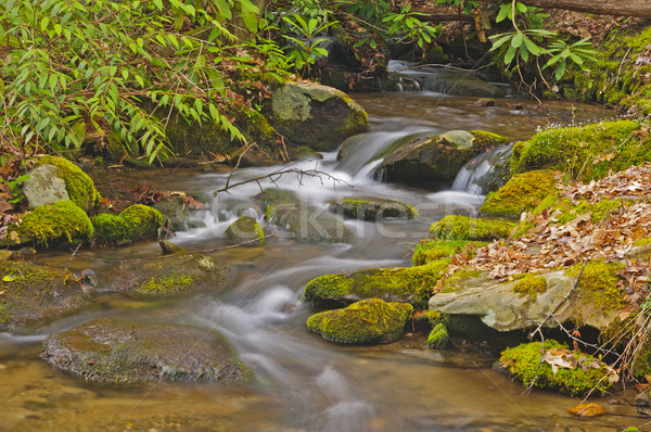 Stock photo: Mountain Stream in Early Morning