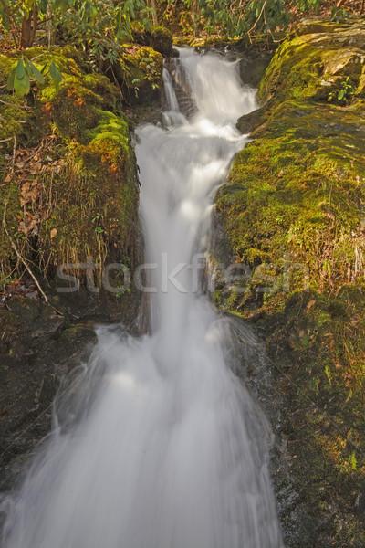 Forêt cascade printemps branche très tôt smoky Photo stock © wildnerdpix