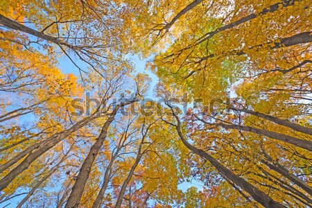 Amarelo árvores rio parque Foto stock © wildnerdpix