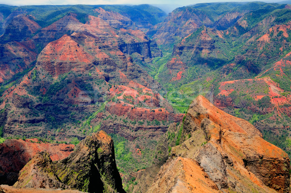 Tropical canyon in Hawaii Stock photo © wildnerdpix