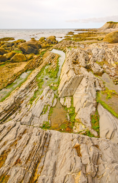 Tide Pools and Jagged Rocks on the Coast Stock photo © wildnerdpix