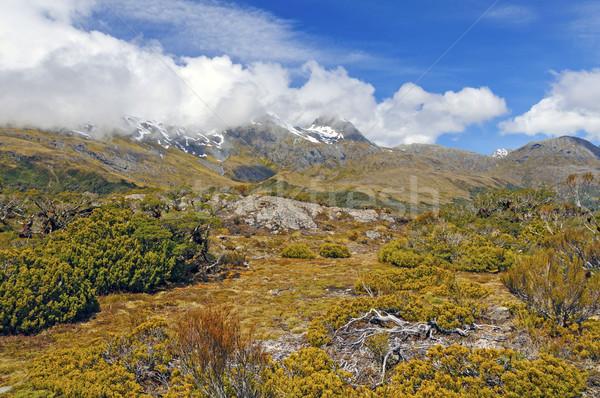 Stock photo: Alpine Vegetation below cloud shrouded peaks