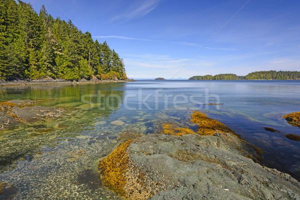 Oceano costa remoto norte Vancouver ilha Foto stock © wildnerdpix
