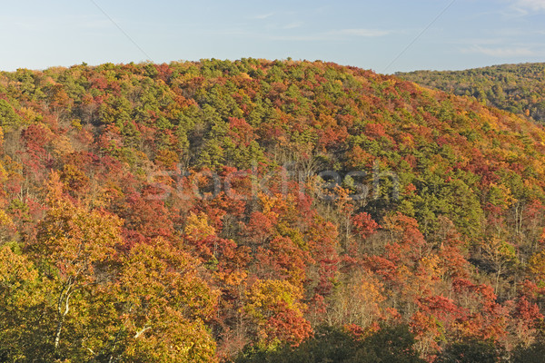 Hillside Erupting in Fall Colors Stock photo © wildnerdpix