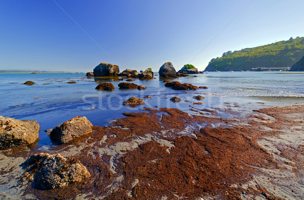 Rocks and Seaweed at Low Tide Stock photo © wildnerdpix