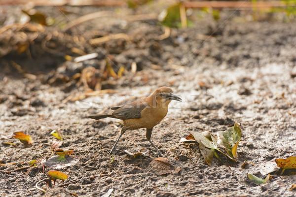 Női természet biológia mocsár Florida vadvilág Stock fotó © wildnerdpix