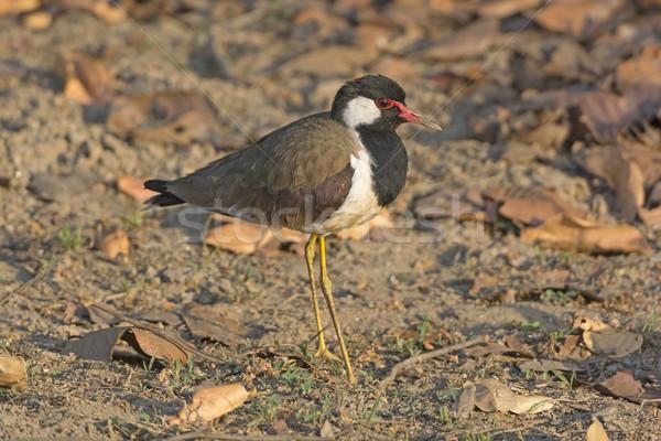 Parco India uccello animale Asia biologia Foto d'archivio © wildnerdpix