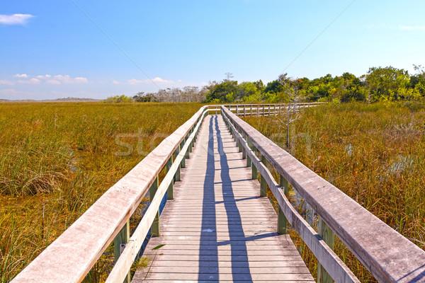 Boardwalk Through a Wetland Marsh Stock photo © wildnerdpix