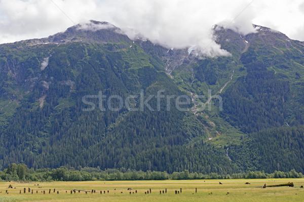 Stromy góry za ocean brytyjski chmury Zdjęcia stock © wildnerdpix