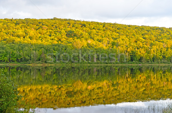 Fall Colors at Sunset on a Wilderness Lake Stock photo © wildnerdpix