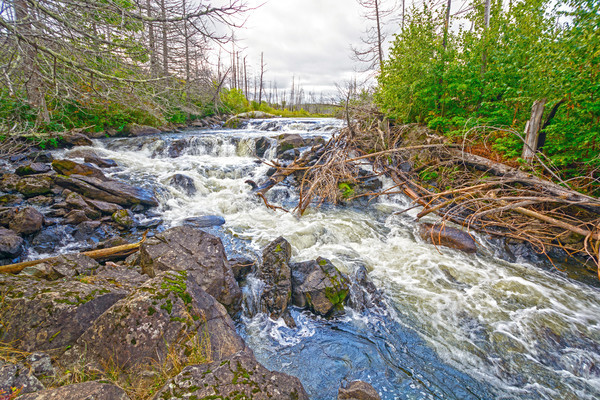 Roaring Cascade in the North Woods Stock photo © wildnerdpix