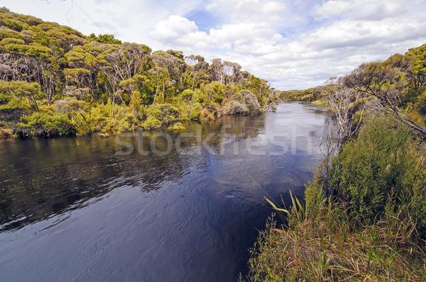 удаленных реке субтропический острове пресноводный Новая Зеландия Сток-фото © wildnerdpix