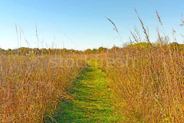 Csendes út préri park Iowa természet Stock fotó © wildnerdpix