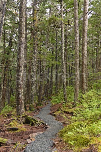 Yol sahil rainforest pil nokta iz Stok fotoğraf © wildnerdpix