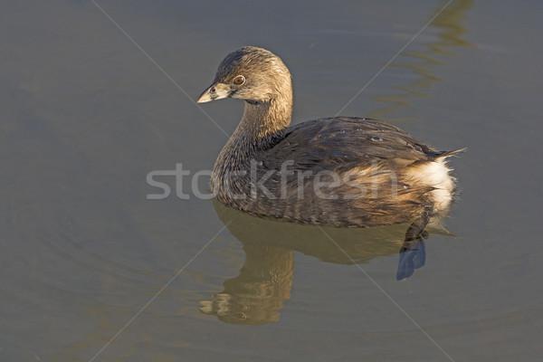 Tavacska kikötő víz természet madár biológia Stock fotó © wildnerdpix