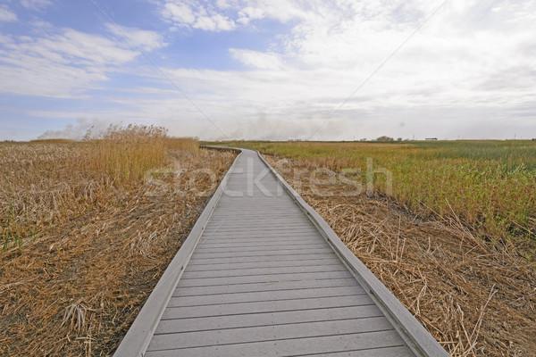 Yaban hayatı doğa manzara uzak iz doğal Stok fotoğraf © wildnerdpix
