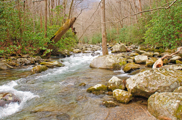 Early spring in the Smoky Mountain Stock photo © wildnerdpix