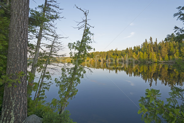 Twilight on a North Woods Lake Stock photo © wildnerdpix