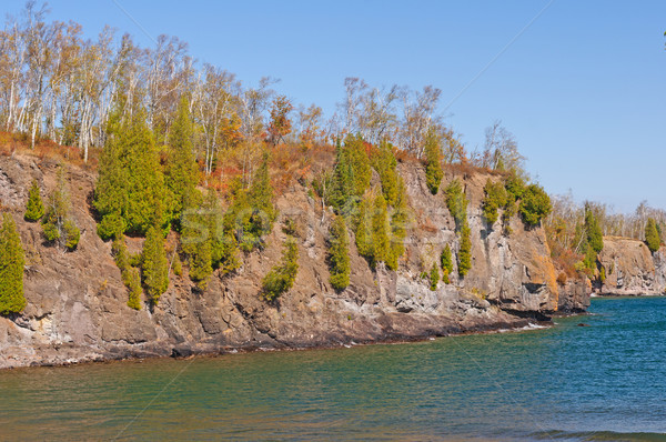 Pines Growing on Rocky Cliff along the Great Lakes Stock photo © wildnerdpix