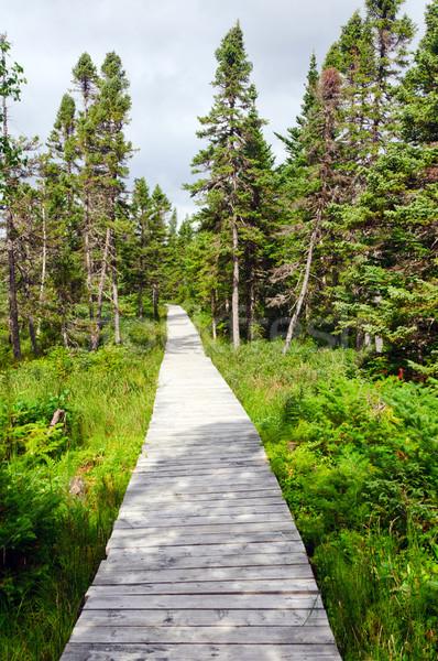 Boardwalk into the North Woods Stock photo © wildnerdpix