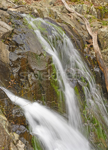Water and Spray in a Secluded Falls Stock photo © wildnerdpix