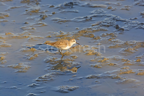 Tuz su ada kuş hayvan Stok fotoğraf © wildnerdpix
