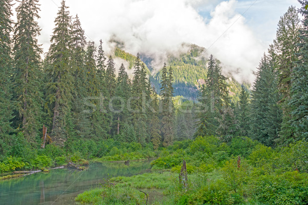 Morning Clouds in the Coastal Mountains Stock photo © wildnerdpix