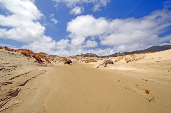 Sand Dunes on a Remote Shore Stock photo © wildnerdpix